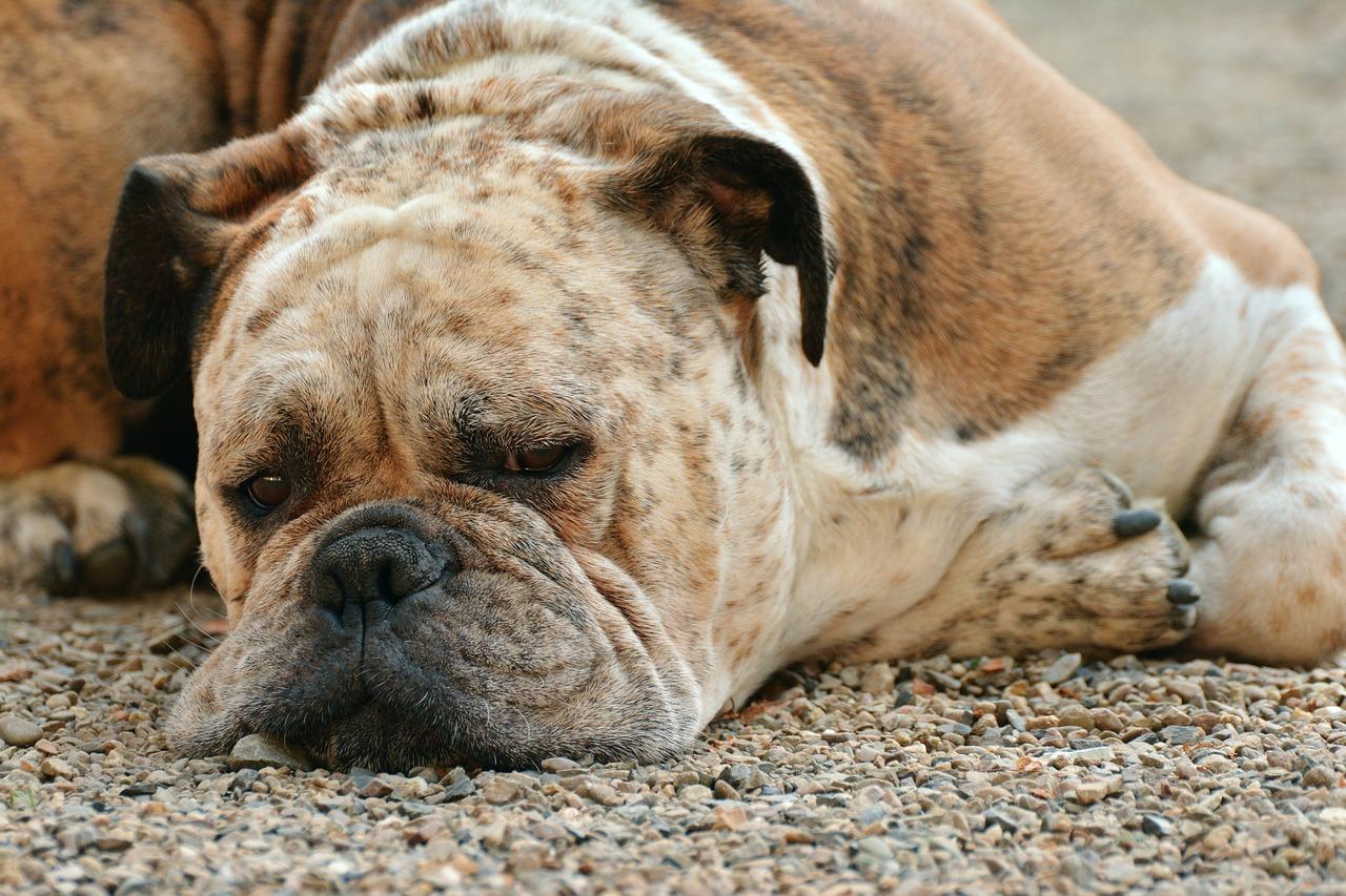 dog-1639528_1280